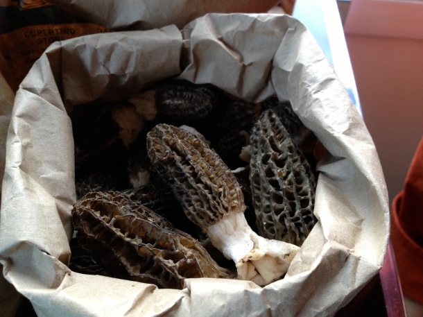 Bags of morel mushrooms are awaiting our very scientific blind tasting. Photo by Christine Willmsen